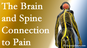 Shoreline Medical Services/ Hutter Chiropractic Office shares at the connection between the brain and spine in back pain patients to better help them find pain relief.